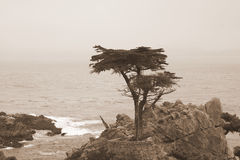 El Cypress solitario Imagenes de archivo