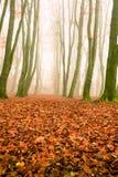 El día brumoso en el parque, naranja del otoño se va Fotografía de archivo libre de regalías