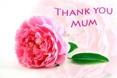 El día de madres le agradece Fotografía de archivo libre de regalías