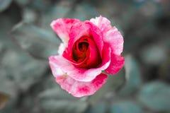 el día de tarjeta del día de San Valentín precioso foto de archivo libre de regalías