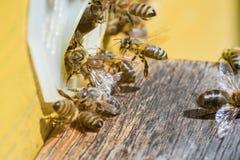 El día en el colmenar, abejas toma el sol en el sol en día caliente, cerca del en Imagen de archivo