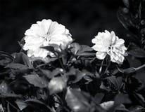 El día planté las flores Imagen de archivo