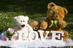 El día y el amor de la tarjeta del día de San Valentín, osos de la felpa para los amantes y un prado por completo de margaritas imagenes de archivo