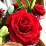 El día y Rose roja de la tarjeta del día de San Valentín Foto de archivo