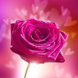El día de tarjeta del día de San Valentín Rose con los corazones Imágenes de archivo libres de regalías