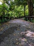 El dar un paseo a través de Central Park imagen de archivo