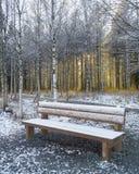 El dar une vuelta en Laponia finlandesa fotografía de archivo libre de regalías