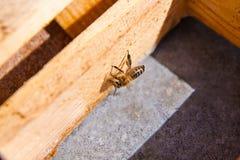 El ¡de Ð pierde encima de la opinión la abeja de trabajo Fotografía de archivo libre de regalías