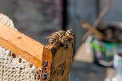 El ¡de Ð pierde encima de la opinión las abejas de trabajo Imagen de archivo