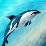El delfín de salto Fotografía de archivo