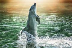 El delfín lindo Fotografía de archivo libre de regalías