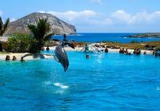 El delfín que salta en la piscina Fotos de archivo libres de regalías