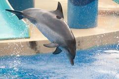 El delfín salta Fotografía de archivo libre de regalías