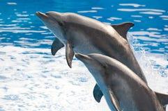 El delfín salta Fotos de archivo libres de regalías