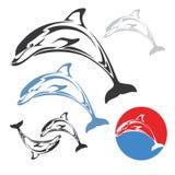 El delfín salta Imagen de archivo libre de regalías