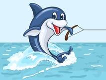 El delfín sonriente monta en su cola como en los esquíes acuáticos Imagen de archivo