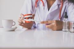 El dentista diagnostica los modelos plásticos con el cepillo de dientes, concepto de los dientes de comprobación dental Imagen de archivo libre de regalías
