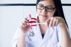 El dentista diagnostica los modelos plásticos con el cepillo de dientes, concepto de los dientes de comprobación dental Foto de archivo