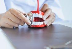 El dentista diagnostica los modelos plásticos con el estetoscopio, concepto de los dientes de comprobación dental Foto de archivo libre de regalías