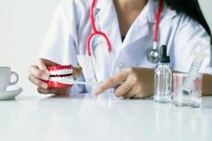 El dentista diagnostica los modelos plásticos en hospital, concepto de los dientes de comprobación dental Imagen de archivo libre de regalías