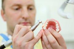 El dentista pule la quijada artificial en clínica dental Fotografía de archivo libre de regalías