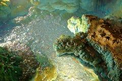 El desear bien con las monedas en las cavernas de Luray fotografía de archivo libre de regalías