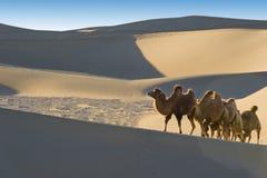 El desierto Foto de archivo libre de regalías