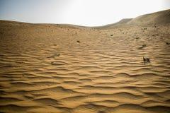 El desierto con las formaciones de la arena causadas por el viento Imágenes de archivo libres de regalías