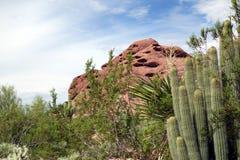 El desierto vivo del sudoeste los E.E.U.U. Fotografía de archivo libre de regalías