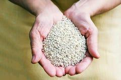 El desperdicio del cereal en las manos en un fondo Fotos de archivo