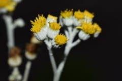 El despertar de flores Foto de archivo libre de regalías