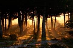 El despertar del día en verano Imagen de archivo libre de regalías