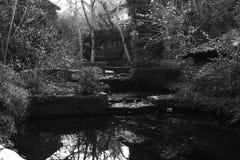 El despertar del lago Fotografía de archivo