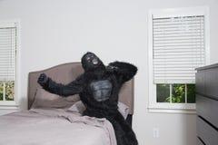 El despertar gruñón - gorila en cama Imágenes de archivo libres de regalías