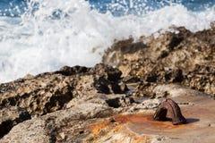El destrozo agita en el gancho Foto de archivo libre de regalías