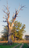 El detalle de la lejíadel alinac de Å cerca de la ciudad de Smederevo en Serbia con los árboles viejos del roble fotos de archivo