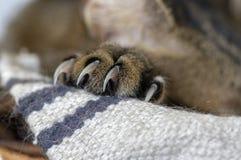 El detalle de la pata de mármol de los gatos con las garras afianzadas con abrazadera, alista para la lucha foto de archivo libre de regalías