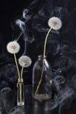 El detalle del último diente de león de la floración con humo en fondo negro de la falta de definición Foto de archivo libre de regalías
