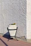 El detalle del edificio con el pote de flores libre illustration