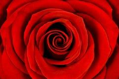 El detalle del rojo se levantó Imagen de archivo libre de regalías