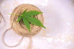 El detalle macro de la guita de la fibra del cáñamo y los cáñamos hojean - la marijuana h imagen de archivo