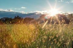 El detalle verde del campo con el cielo azul se nubla el backgrund y el sol en verano Foto de archivo libre de regalías