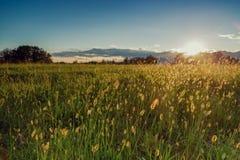 El detalle verde del campo con el cielo azul se nubla el backgrund y el sol en verano Fotografía de archivo libre de regalías