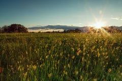 El detalle verde del campo con el cielo azul se nubla el backgrund y el sol en verano Fotos de archivo