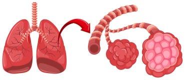 El diagrama de la pulmonía con enfoca adentro los pulmones stock de ilustración