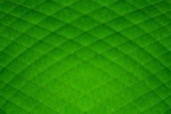 El diamante verde de la hoja del plátano raya el fondo abstracto Fotografía de archivo