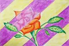El dibujo color de rosa hermoso hecho por la pluma del bosquejo y el color dibujan a lápiz, un arte del niño Imagen de archivo