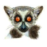 El dibujo de la acuarela del animal del mamífero del lémur con la naranja grande observa con el pelo y la cola, retrato del lémur ilustración del vector