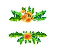 El diente de león de la primavera de la acuarela florece, florece marco aislado en el fondo blanco Imágenes de archivo libres de regalías