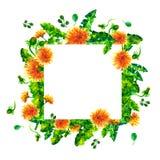 El diente de león de la primavera de la acuarela florece, florece marco cuadrado aislado en el fondo blanco Fotografía de archivo